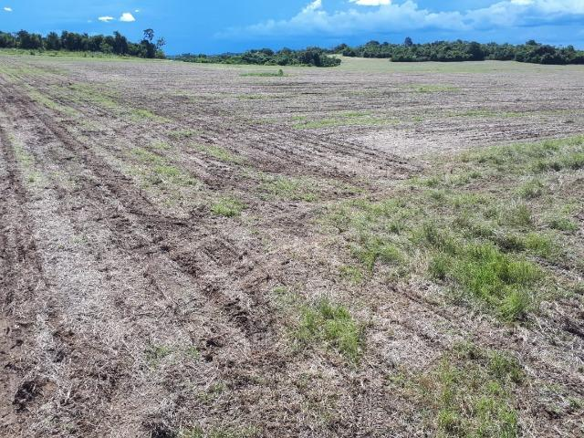 200 hectares, 20 km de Guarantã do Norte -MT - Foto 2