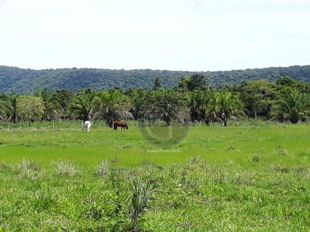 Chacara 40 hectares em mimoso - Foto 19