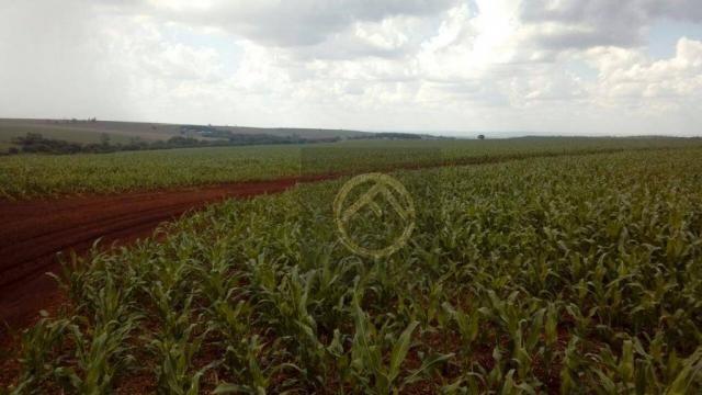 Fazenda rural à venda, 890 alqueires, Assis Chateaubriand - PR. - Foto 2