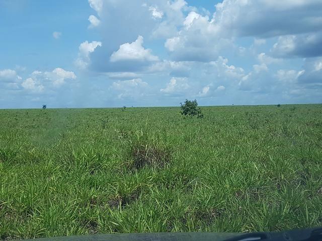 Fazenda 2500 ha Guaraí -TO