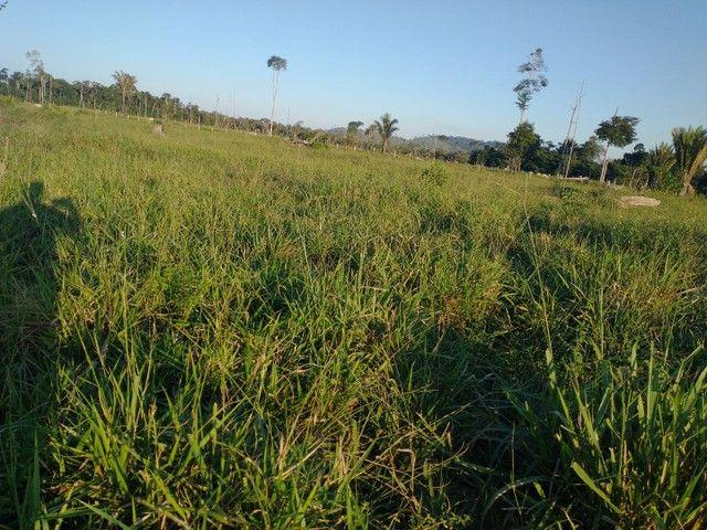 96 Alqueires aceita terra em Theobroma