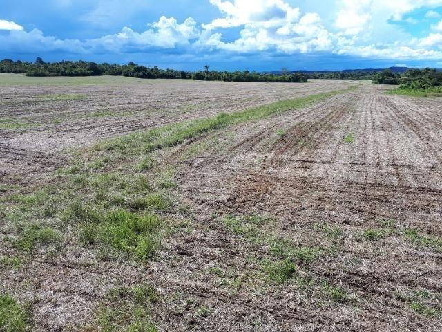 200 hectares, 20 km de Guarantã do Norte -MT - Foto 5