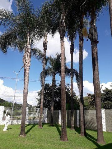 Palmeira Imperial - Foto 3