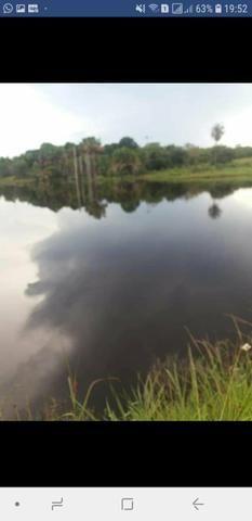 Faz. 12 alqueires à 30 km de Imperatriz- porteira fechada * - Foto 3