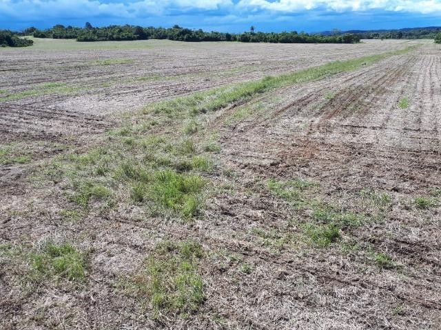 200 hectares, 20 km de Guarantã do Norte -MT - Foto 11