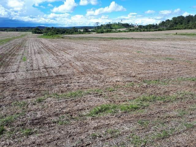 200 hectares, 20 km de Guarantã do Norte -MT - Foto 10
