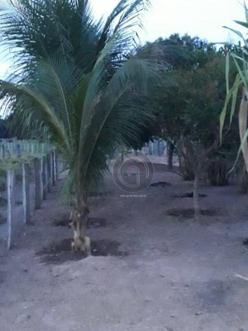 Chacara 40 hectares em mimoso - Foto 14