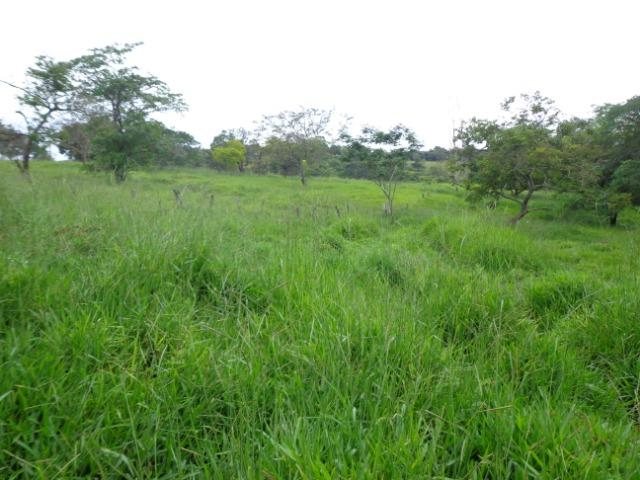 Terrenos, Sítios e Fazendas 70 Há Região de Para de Minas-MG - Foto 3