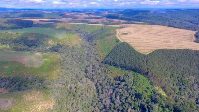 Fazenda (185 alqueires) - Cerro Azul - Foto 11