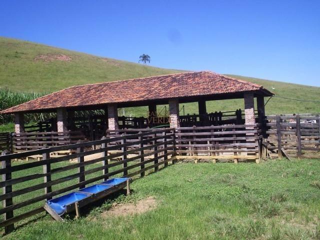Fazenda rica em água ótimo para Gado - Cód 1505 - Foto 13