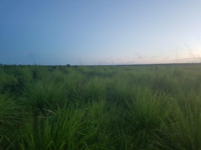 Fazenda 2500 ha Guaraí -TO - Foto 9
