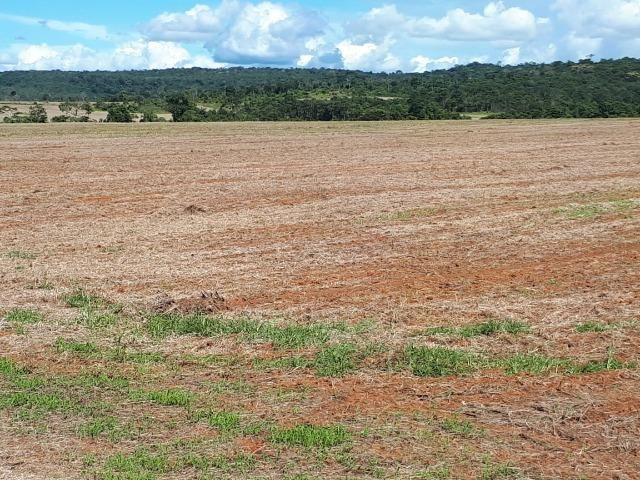 200 hectares, 20 km de Guarantã do Norte -MT