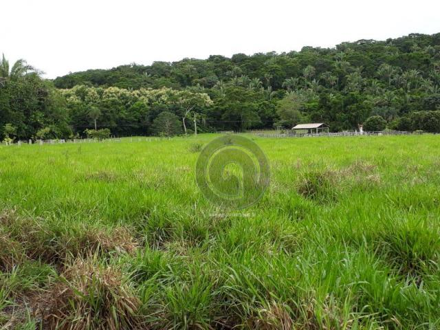 Chacara 40 hectares em mimoso - Foto 20