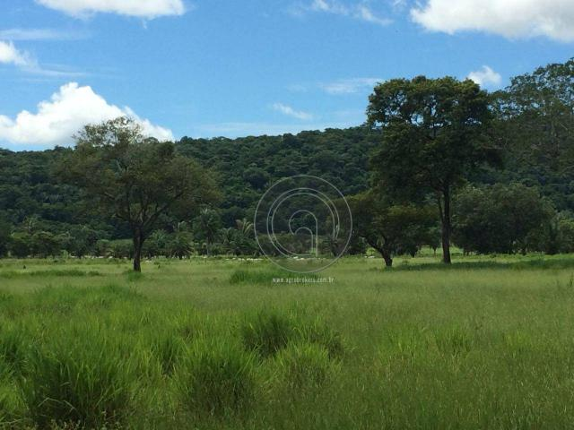 Chacara 40 hectares em mimoso - Foto 13