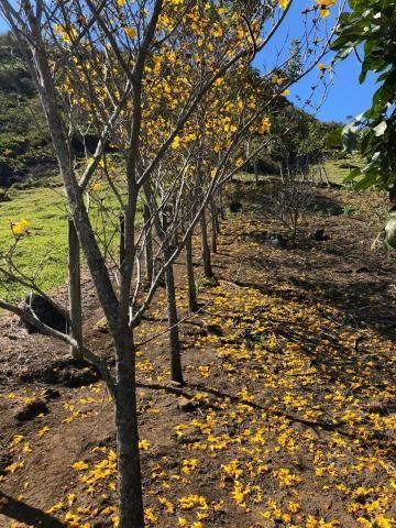 Linda Chácara na Montanhas Capixabas, com uma extensa área de hortas e pomares, com um lin - Foto 8