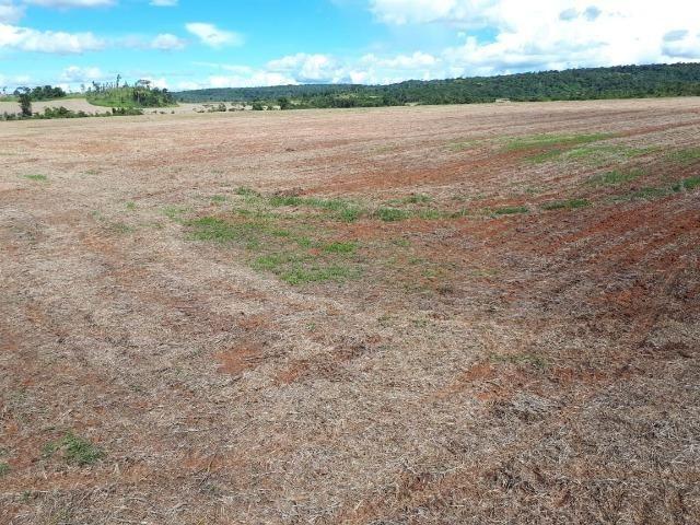 200 hectares, 20 km de Guarantã do Norte -MT - Foto 9