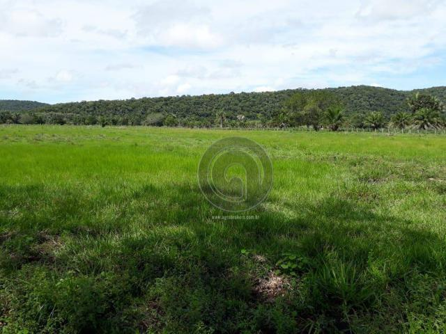Chacara 40 hectares em mimoso - Foto 11