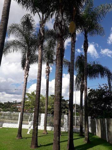 Palmeira Imperial - Foto 2