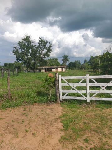 Faz. 12 alqueires à 30 km de Imperatriz- porteira fechada * - Foto 10