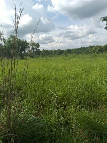 Faz. 12 alqueires à 30 km de Imperatriz- porteira fechada * - Foto 5