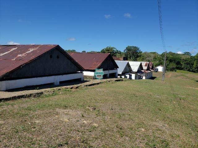Ilhéus. Fazenda com 368 Hectares cultivo de cacau e gado - Foto 5