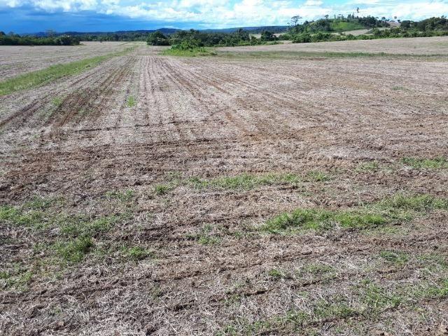 200 hectares, 20 km de Guarantã do Norte -MT - Foto 7