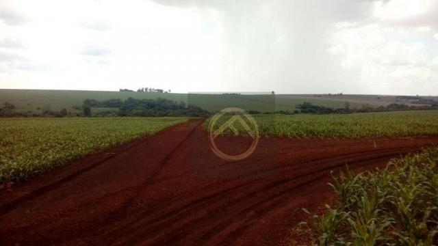 Fazenda rural à venda, 890 alqueires, Assis Chateaubriand - PR. - Foto 3