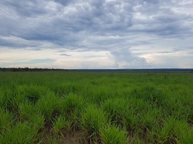 Fazenda 2500 ha Guaraí -TO - Foto 7