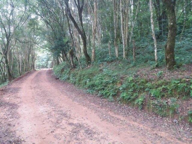 chacara em Rio Branco do sul - Foto 2