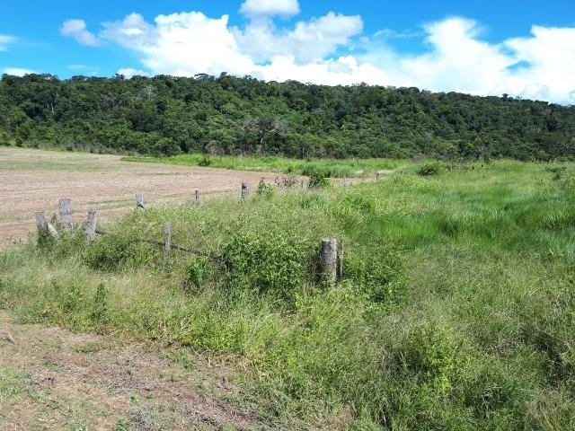 200 hectares, 20 km de Guarantã do Norte -MT - Foto 3