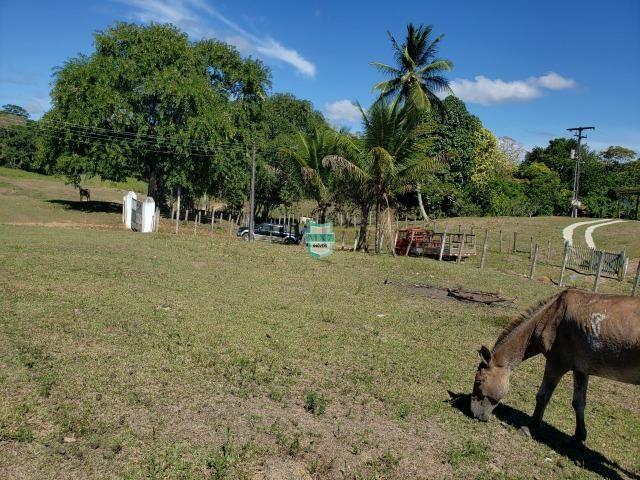 Ilhéus. Fazenda com 368 Hectares cultivo de cacau e gado - Foto 14