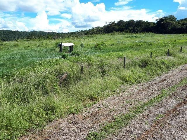 200 hectares, 20 km de Guarantã do Norte -MT - Foto 13