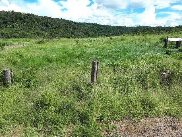 200 hectares, 20 km de Guarantã do Norte -MT - Foto 15