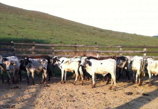 Fazenda rica em água ótimo para Gado - Cód 1505 - Foto 11