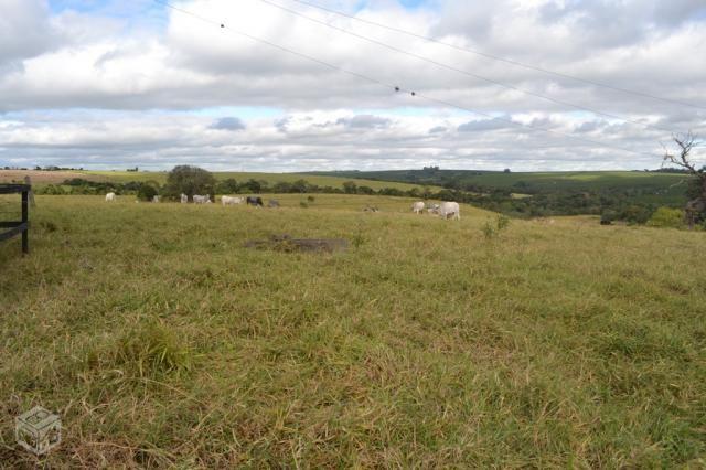 Fazenda proximo sorocaba sp região 60 alqueires - Foto 18