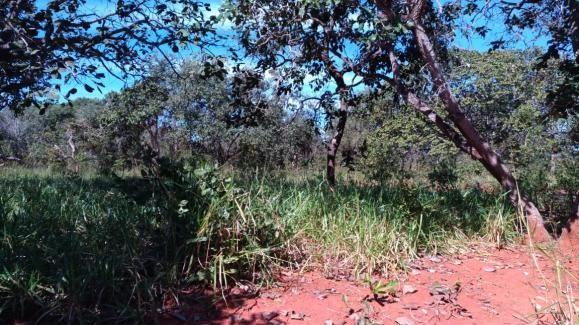 Fazenda 31 hectares em Curvelo/MG. - Foto 11
