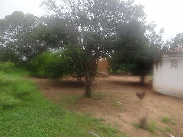 Fazenda sao paulo do potengi - Foto 3