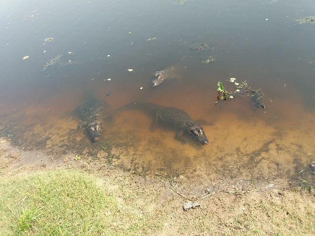 Rancho para pesca e passeio Pantanal (rancho Ma&Vi) Coração do Pantanal - Foto 18