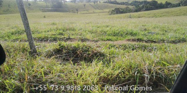 Bahia 200 hectares Pecuária - Foto 9