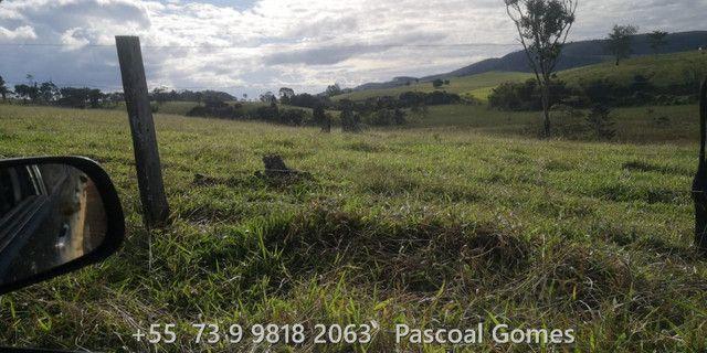 Bahia 200 hectares Pecuária - Foto 12