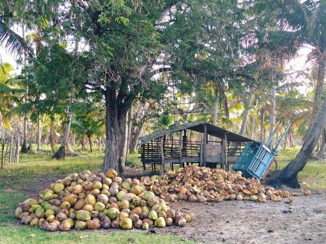 Ilha paradiasiaca na lagoa 100% escriturada e registrada - Foto 3