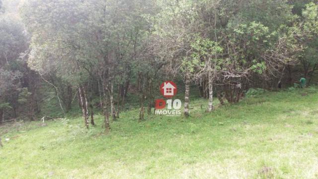 Chácara a venda, próximo ao monumento dos bertussi - r$ 85.000,00 - Foto 2