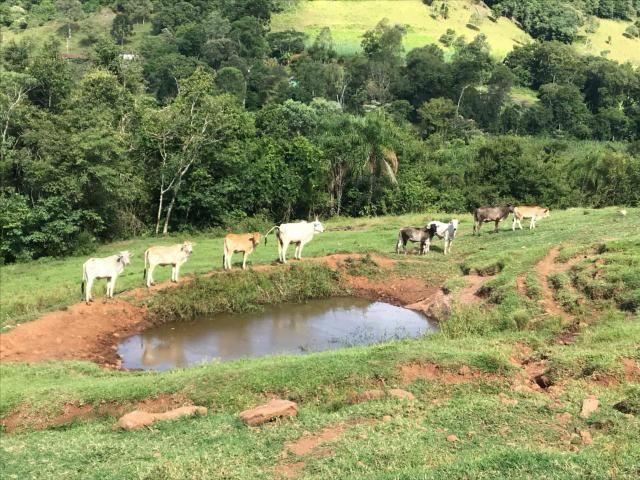 Área Rural - Foto 5