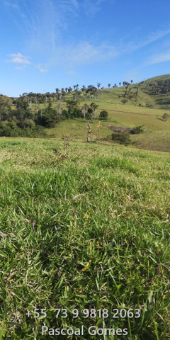 Bahia 200 hectares Pecuária - Foto 10