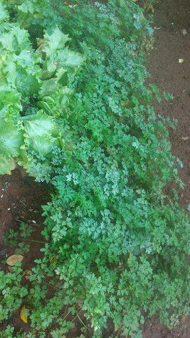 Verduras com preços especiais para vcs - Foto 4