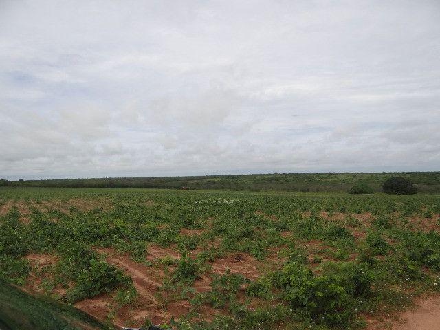 Fazenda sao paulo do potengi - Foto 11