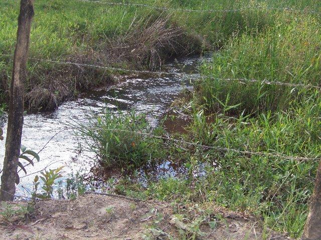 Fazenda com 700 Hectares em Barra de Guabiraba (Cód.: f20568) - Foto 16