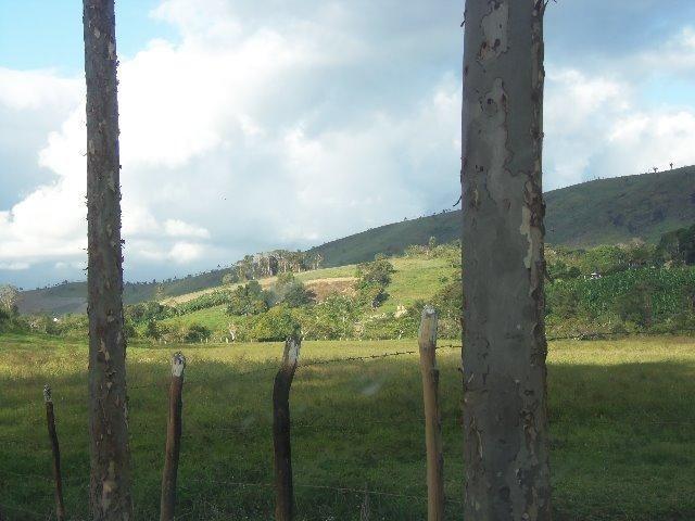 Fazenda com 700 Hectares em Barra de Guabiraba (Cód.: f20568) - Foto 12