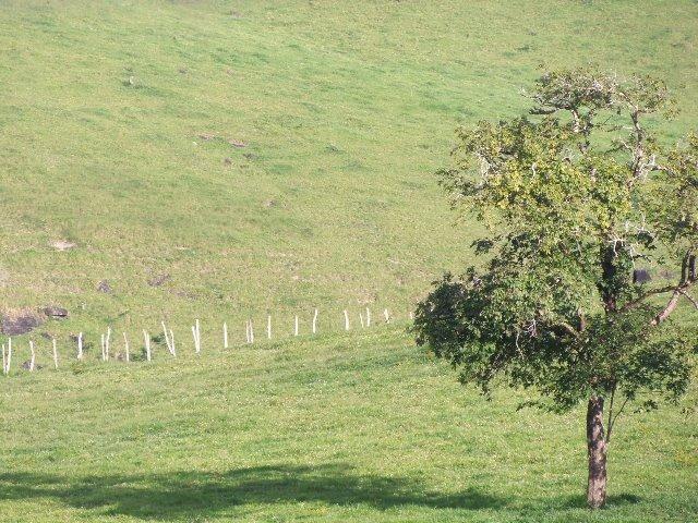 Fazenda com 700 Hectares em Barra de Guabiraba (Cód.: f20568) - Foto 5
