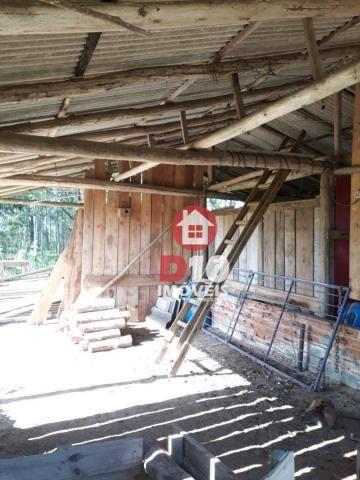 Chácara com 4 dormitórios à venda, 36000 m² por R$ 500.000 - Vila Santa Catarina - São Joã - Foto 6